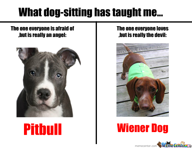 Pitbulls And Wiener Dogs by nyandeerxd - Meme Center