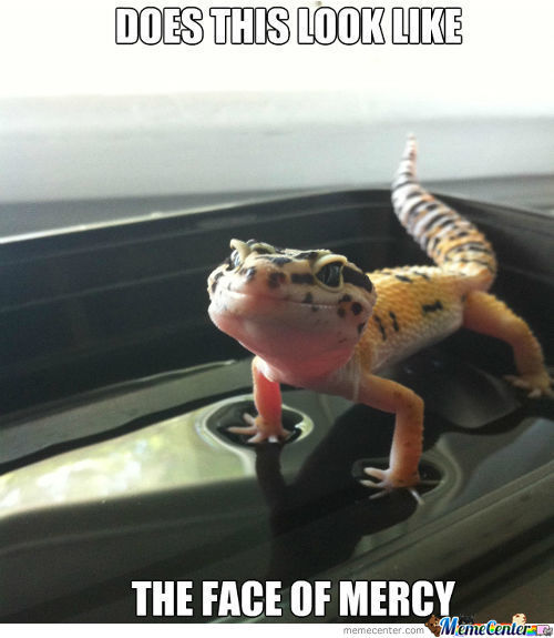 Please Mr. Lizard Have Mercy