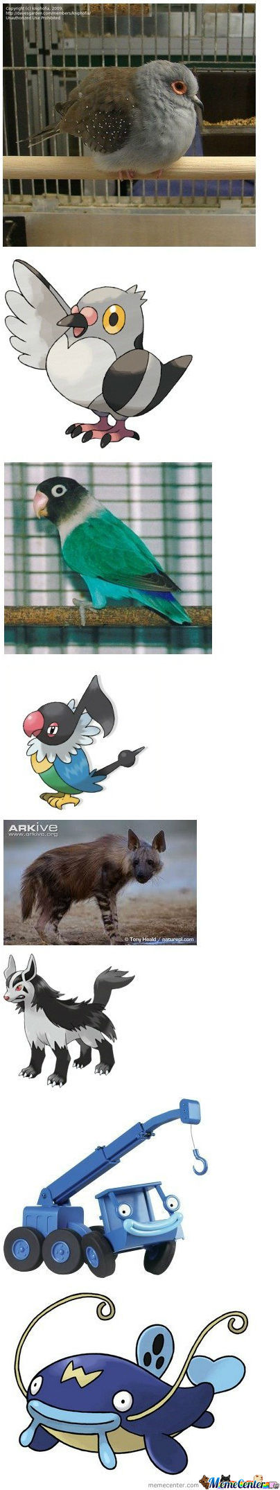 Pokemon Look-A-Likes