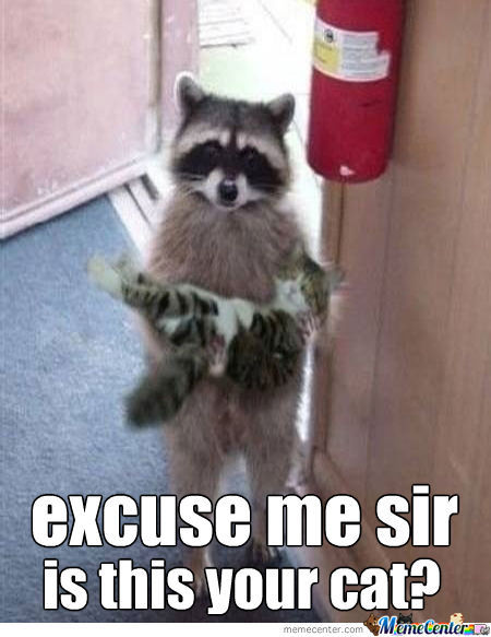 Polite Raccoon