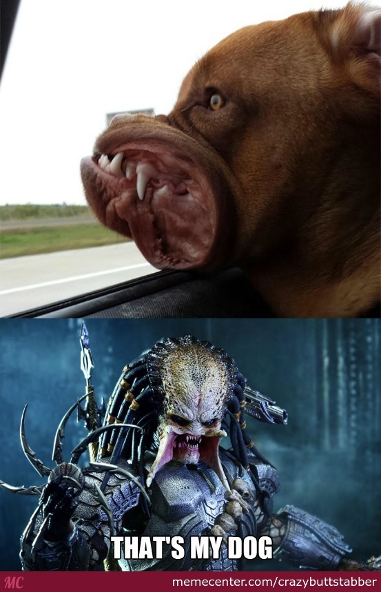 Predator's Pet
