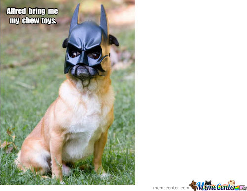 Pug Dressed as Batman Pug Batman