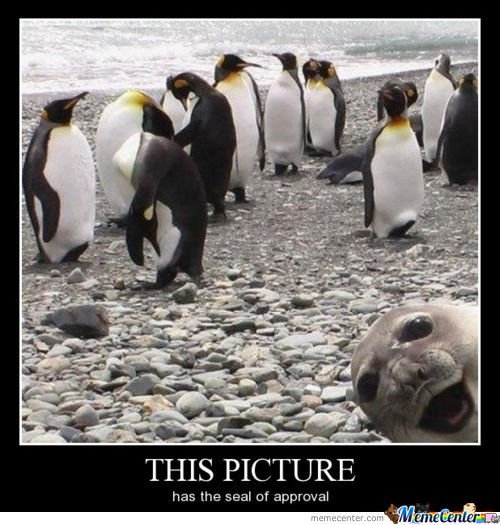 """""""seal"""" Of Approval"""