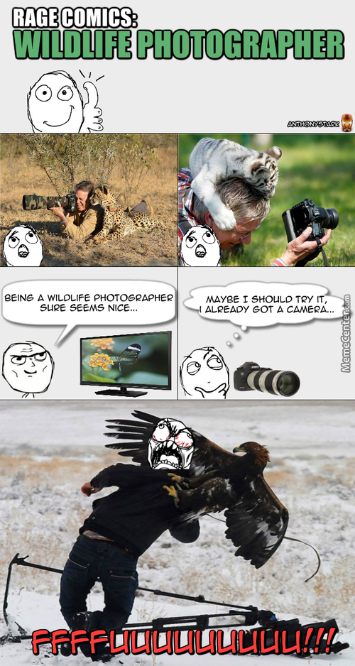 Rage Comics: Wildlife Photographer