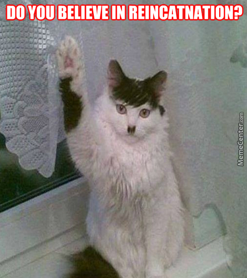 Raise Your Paw If You Believe In Reincarnation :3