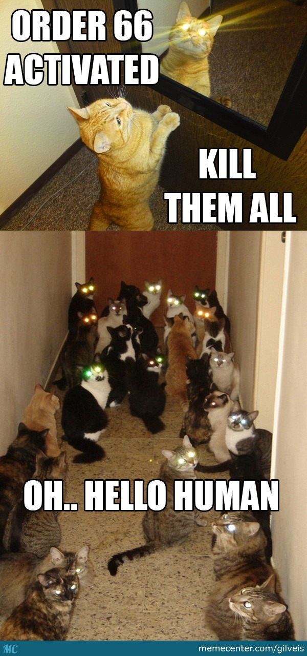 Real Faces Of Cats.