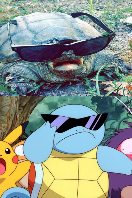 Real Life Squirtle :3
