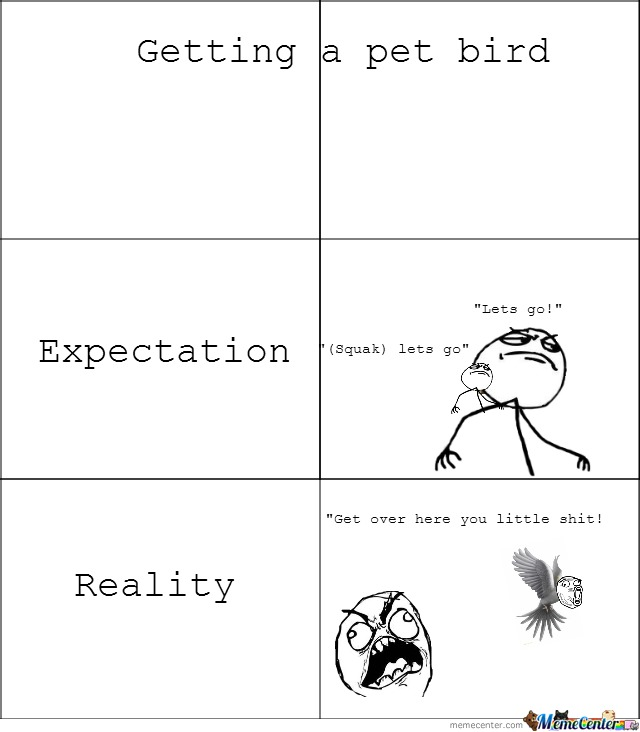 Reality Of A Pet Bird