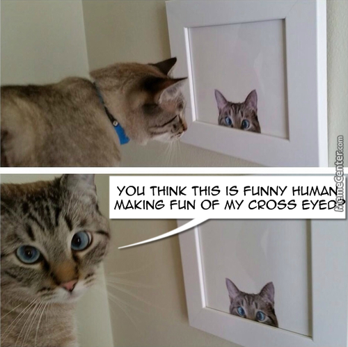 Really Funny Human