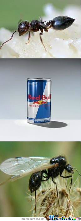 Redbull Gives You Wings, Alcohol Gives You 4X4