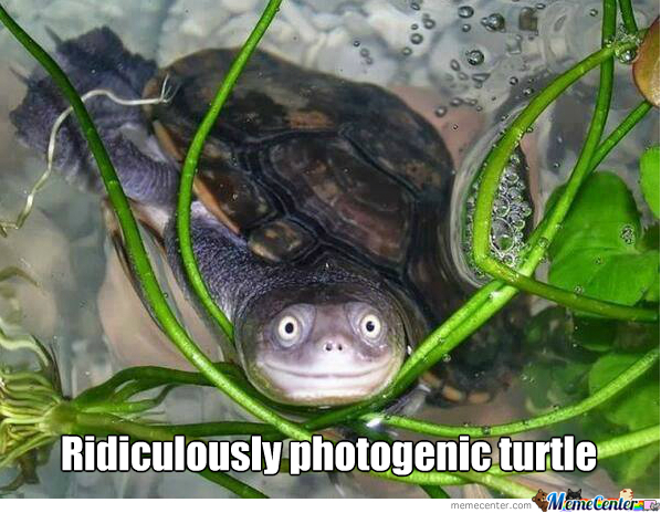Ridiculously Photogenic Turtle