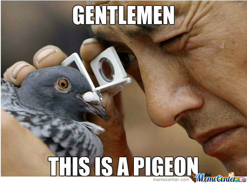 [RMX] A Real Pigeon