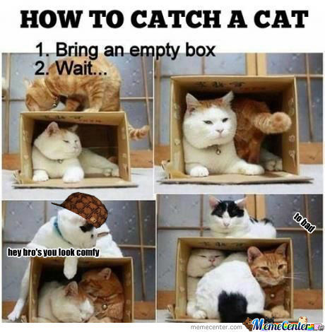 [RMX] How To Catch A Cat