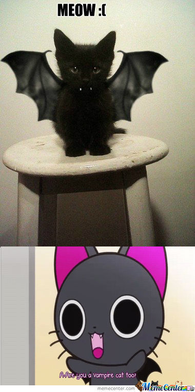 [RMX] I'm a cat, not  a bat.