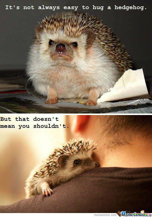 [RMX] it's not always easy to hug a hedgehog