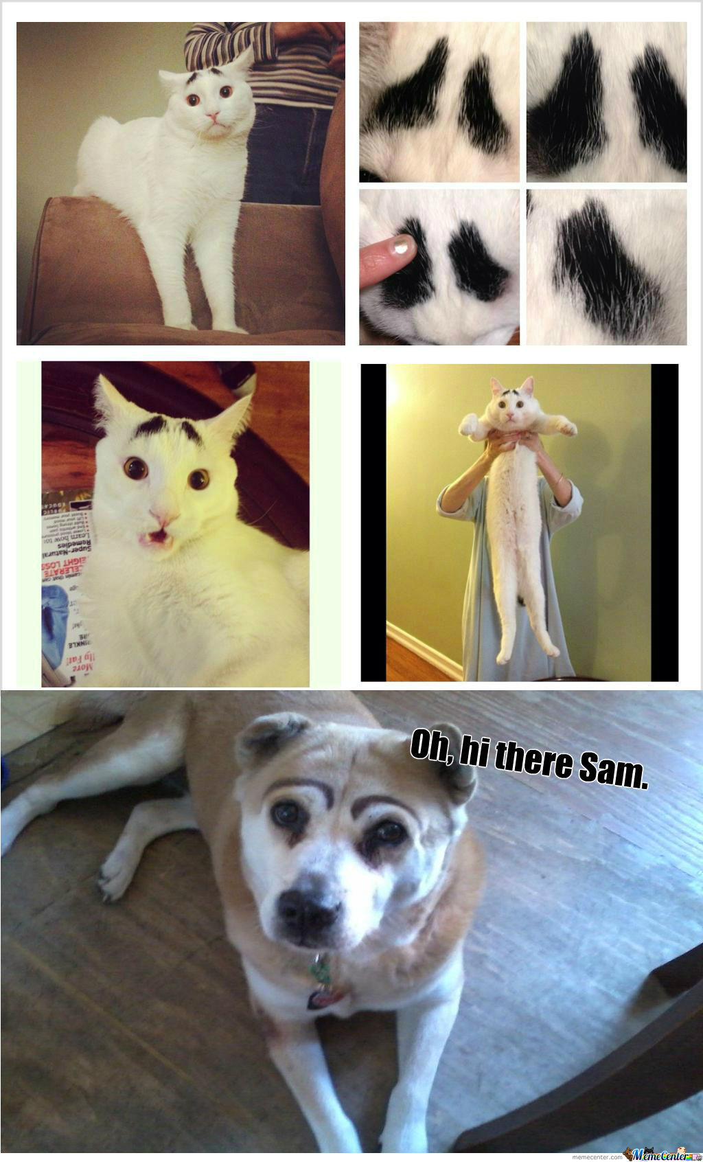 [RMX] Meet Sam, The Cat With Eyebrows.