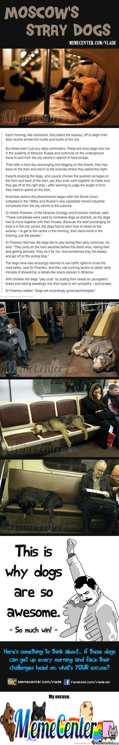 [RMX] Moscow's Stray Dogs