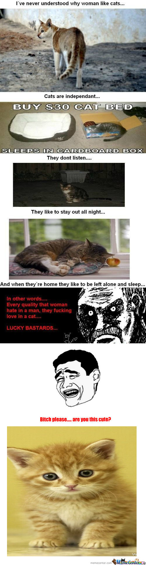 [RMX] Never Understood Why Woman Like Cats....