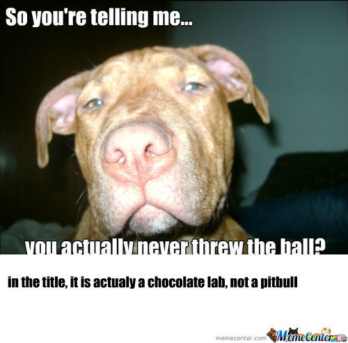 [RMX] Skeptical Pitbull 2