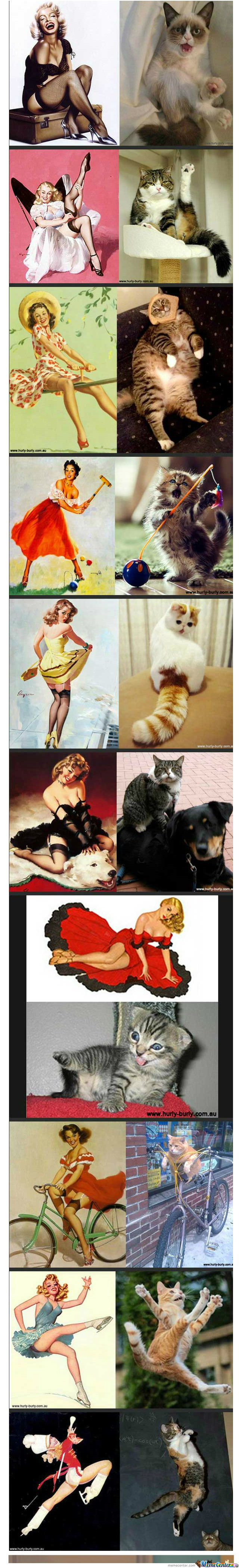 [RMX] vintage photos and cats