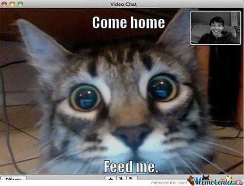 [RMX] When You're Cat Videochat You