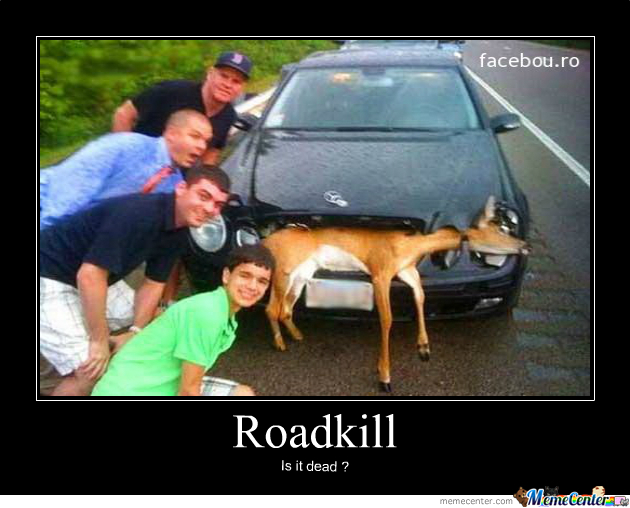 Roadkill Cat Meme