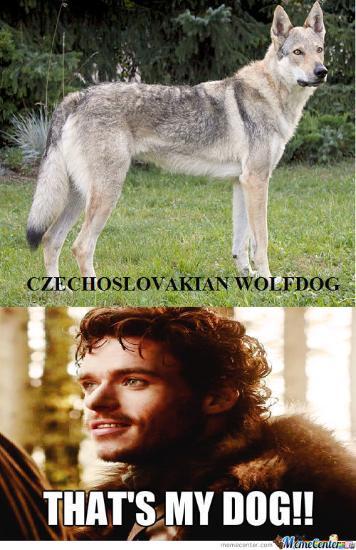Robb Stark Approves