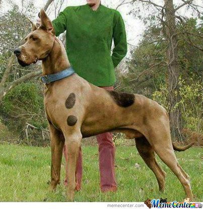 Scooby?