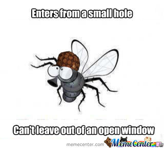 Scumbag Fly/bee
