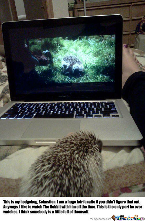 Sebastian The Hedgehog