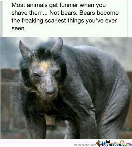 Shaven Bears