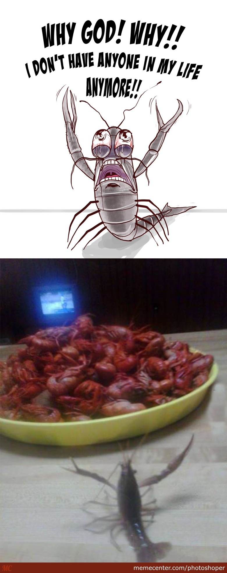Shrimp Holocaust