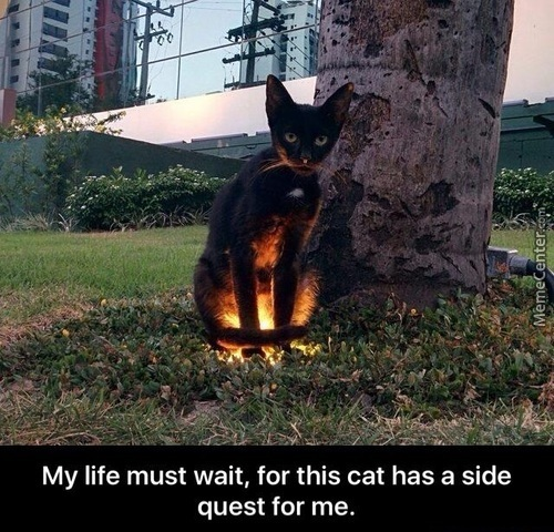 Side Quest Cat