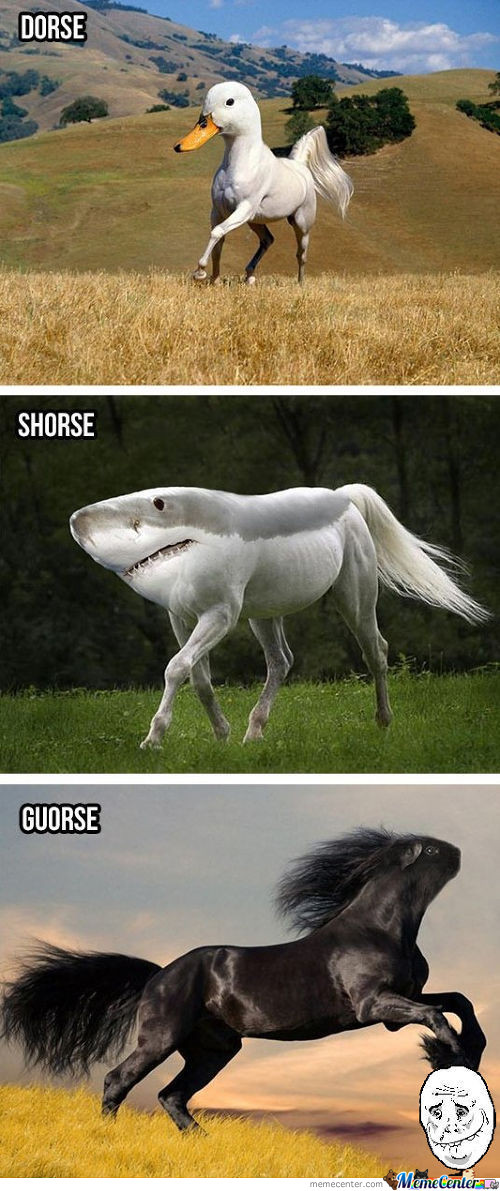 Silly Horses!