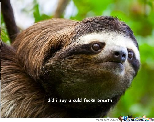 Sloth Think You Stoopid