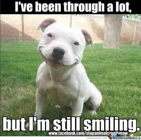 Smiling Dog Is Smiling...