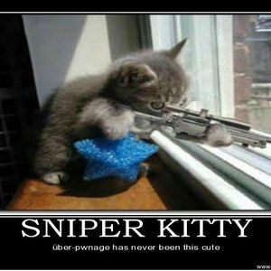 Image Gallery sniper kitty