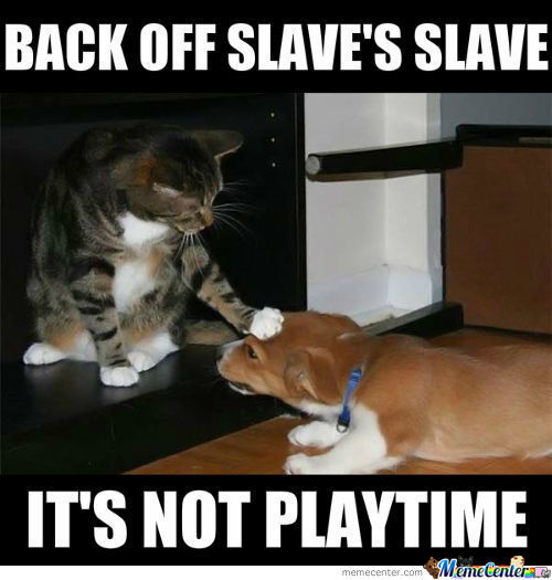 So Many Slaves