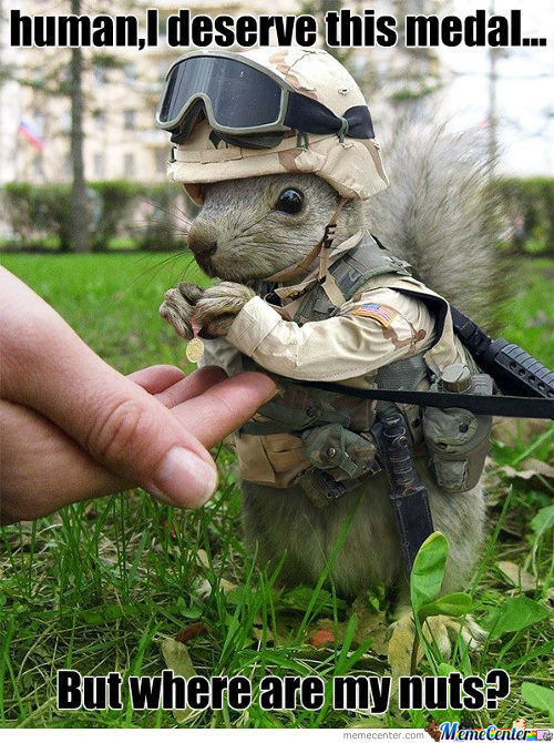 Soldier Squirrel