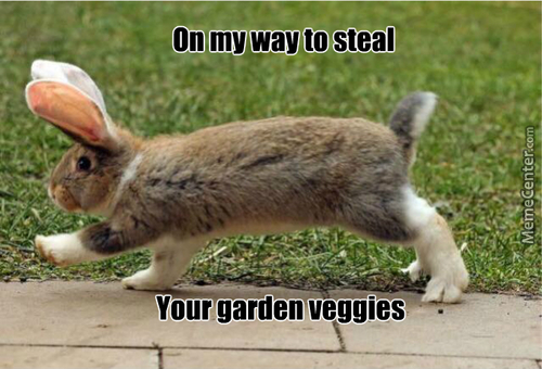 Something This Cute Can Eat My Veggies