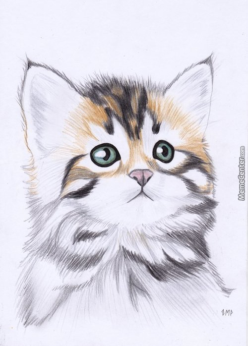Sorry, Not A Meme (But I'm Planning To Make One Soon). A Kitten (Doodle)
