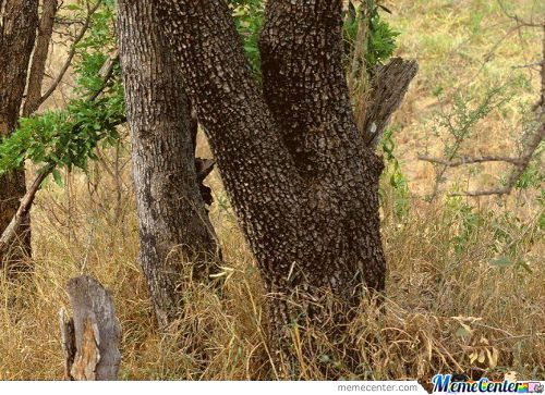 Spot The Leopard In The Picture.