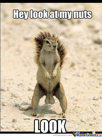 Squirrel Nuts