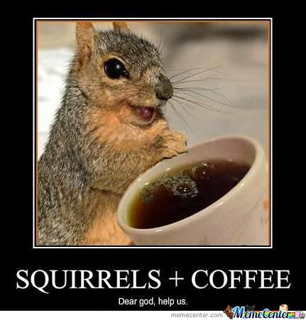 Squirrels+Coffee