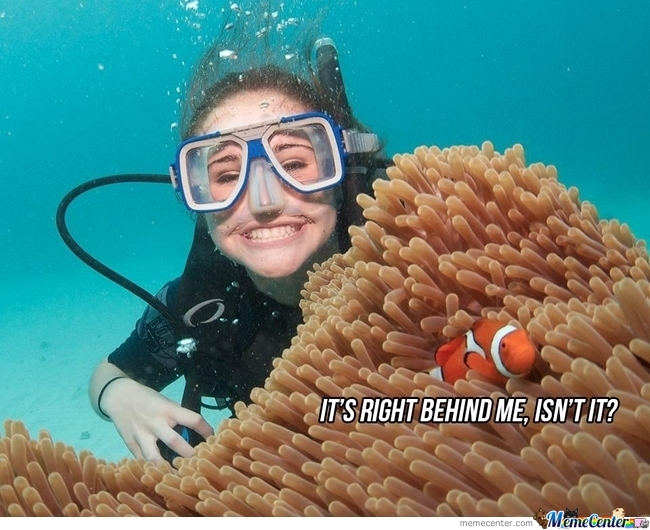 Stay Down, Nemo