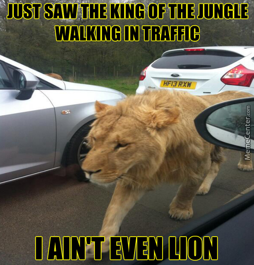Stop Lion Around And Call For Some Help!
