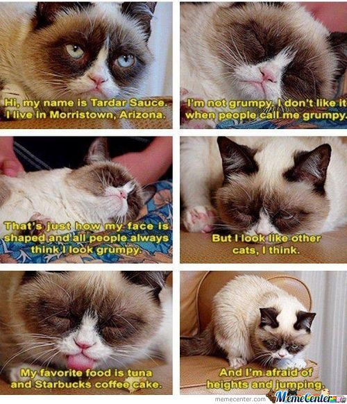 Story Of Grumpy Cat