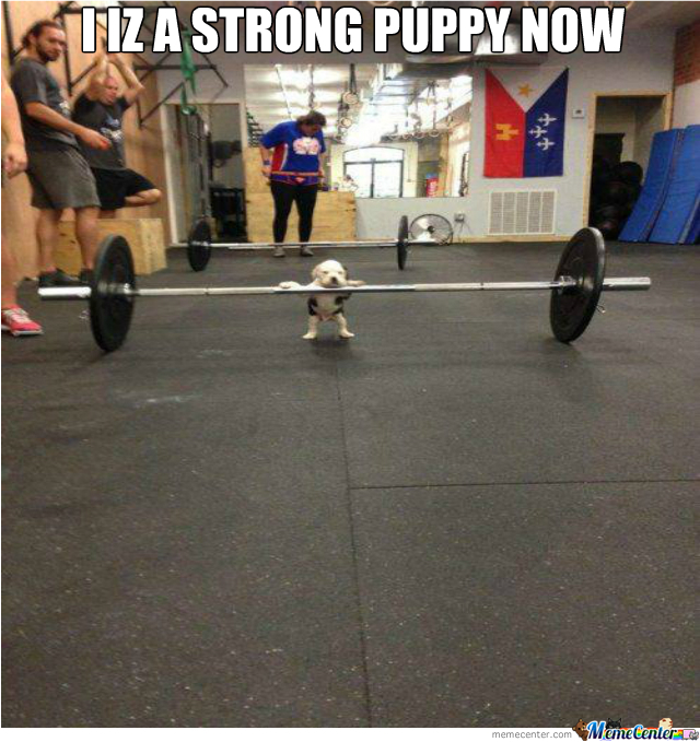 Strong Puppy!