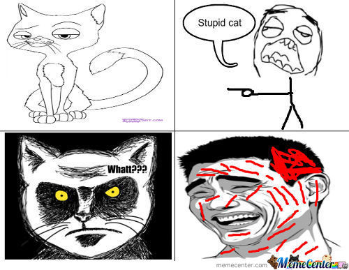 Stupid Cat!!   Outsss