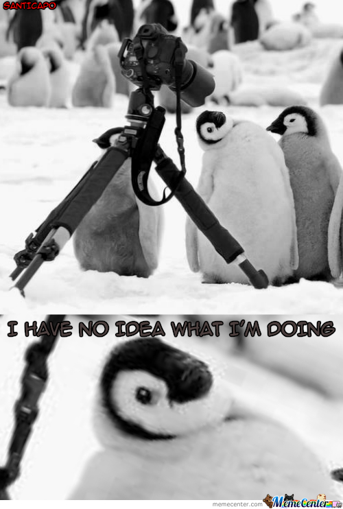 Stupid Penguin